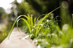 Nytt grönt gräs med vattendroppar Arkivfoton