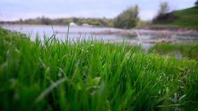 Nytt grönt gräs nära sjön arkivfilmer