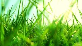 Nytt gr?s p? ett soligt gr?nt f?lt p? soluppg?ng, naturbakgrund lager videofilmer