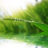 Nytt grönt gräs med closeupen för daggdroppar Royaltyfri Bild