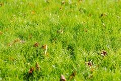 Nytt höstgräs royaltyfri bild
