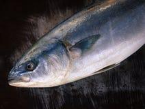 nytt hav för fisk Royaltyfri Fotografi