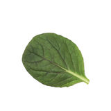 Nytt isolerat salladblad Arkivfoto
