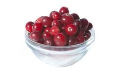 nytt isolerat vitt wild för bunkecranberries Royaltyfria Foton