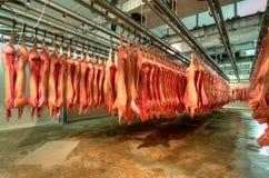 Nytt kött i en fabrik för kallt snitt arkivbilder