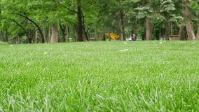 Nytt klippt grönt gräs för våren parkerar in stock video