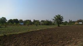 Nytt land och jordbruks- skördar stock video