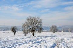 nytt land plogad snow royaltyfri foto