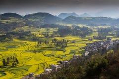 Nytt landskap för vår av färgrika fält, royaltyfri foto