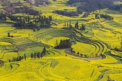 Nytt landskap för vår av färgrika fält royaltyfri fotografi