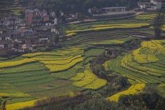 Nytt landskap för vår av färgrika fält, arkivbilder