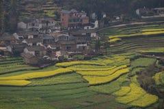 Nytt landskap för vår av färgrika fält royaltyfri bild