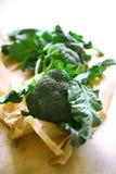nytt leavespapper för broccoli Royaltyfri Fotografi