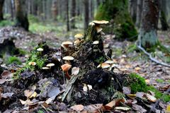 Nytt liv av en gammal trädstubbe arkivbilder