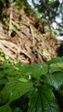 Nytt liv bredvid deadwooden Arkivbilder