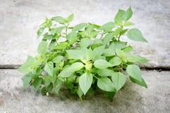 Nytt liv för växt Arkivbild