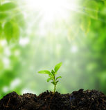 Nytt liv för litet träd Arkivbild
