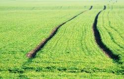 Nytt ljus - grön åkerbruk fältbakgrund Arkivfoto