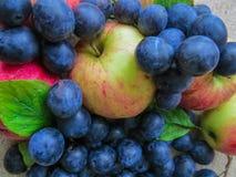 Nytt, mörkt - blåa plommoner och äpplen spridda på tabellen royaltyfri fotografi