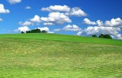 nytt mejad lawn arkivfoto