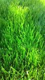 nytt mejad lawn Grönt gräs arkivbild