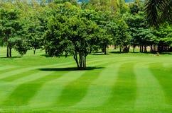 Nytt mejade gräsmatta och träd i en golfbana Arkivbilder