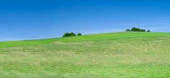 nytt mejade lawn arkivfoton