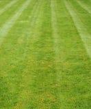 nytt mejat gräs visa band arkivfoton
