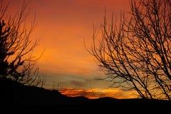 Nytt - Mexiko soluppgång till och med träden Royaltyfria Foton