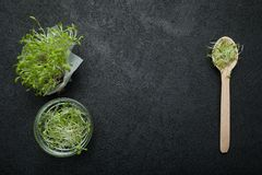 Nytt microgreen av grönsaksallad på en svart bakgrund, utrymme för text royaltyfria foton