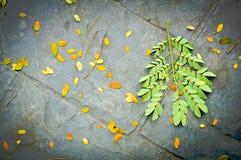 Nytt och torrt blad på den svarta cementjordningen Fotografering för Bildbyråer