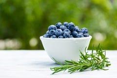 Nytt organiskt blåbär med vattendroppar blåbär bowlar white kopiera avstånd Fotografering för Bildbyråer