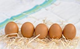 nytt organiskt för ägg Royaltyfri Foto