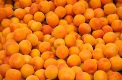 nytt organiskt för aprikosar Fotografering för Bildbyråer