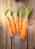 nytt organiskt för morötter Royaltyfri Fotografi