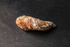 Nytt, rå och enkla ostron på en svart bakgrund Kylde rå ostron Läckert tropiskt havsblötdjur kopiera avstånd Arkivbild