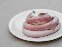 nytt rått hav för ål arkivbilder