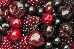 Nytt sökte efter föda frukter av skogen royaltyfria bilder