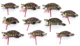 nytt sköldpaddaår Arkivfoto