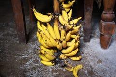 nytt skördade bananer i hans trädgård av bönder Arkivfoton