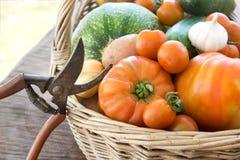 nytt skördade grönsaker Fotografering för Bildbyråer