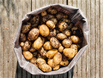 Nytt skördade potatisar Royaltyfri Foto