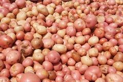 nytt skördade potatisar Arkivbilder