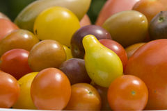 Nya trädgårds- tomater Arkivbilder