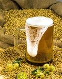 Nytt skummande öl i ett exponeringsglas Fotografering för Bildbyråer