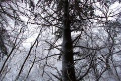 Nytt snöfall i Illinois Arkivfoto