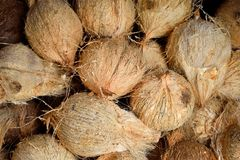 Nytt som skrapas av kokosnötter royaltyfri foto