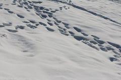 Nytt stupad mjuk snö med fottryck Arkivfoton