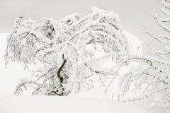 Nytt stupad snö på träden i parkera i vinter arkivfoton