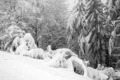 Ny snow, vinterkull Arkivfoto